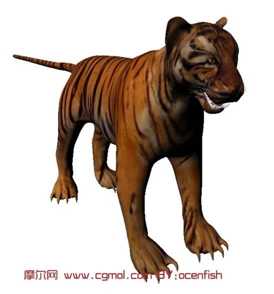 老虎四足动物走路分解图