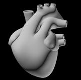 人体心脏3D模型