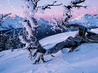 雪景,雪花特效3D模型(背景为图片,只有特效)