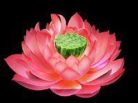 精美荷花,莲花3D模型(唯美有贴图)