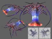 五彩龙虾3D模型