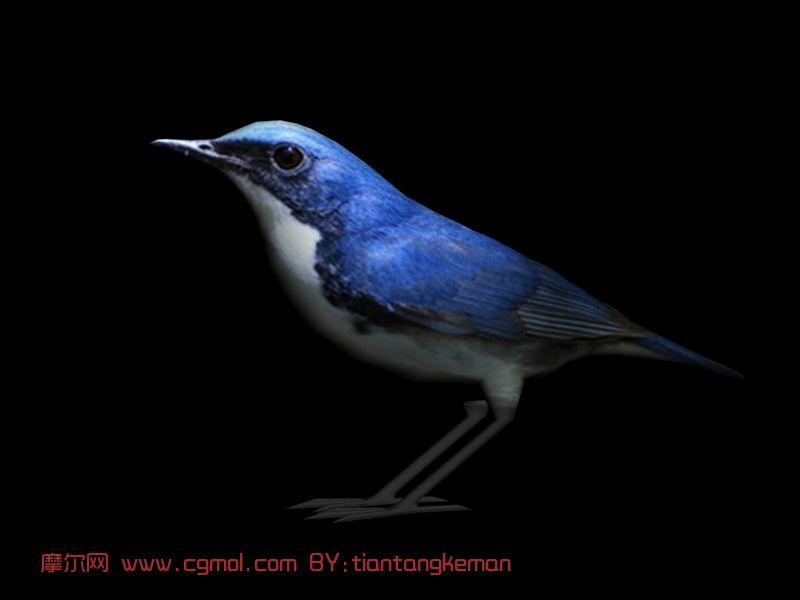 动物模型 飞禽动物