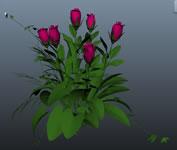玫瑰,玫瑰花maya模型