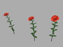 红色花朵maya模型