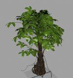 小树3D模型