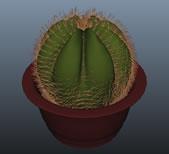 仙人球盆栽maya模型