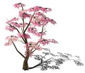 桃树,桃花3D模型
