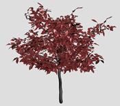 红枫树,树木3D模型