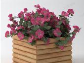 花箱,绿化盆栽植物
