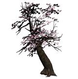 樱花树,桃树3D模型