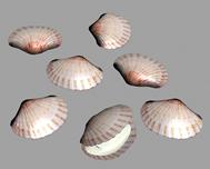 小贝壳3D模型
