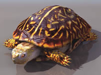 乌龟,海龟3D模型(有材质贴图)