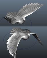 maya 鸽子模型(拍打翅膀动作)