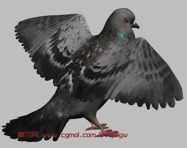 高清鸽子3D模型