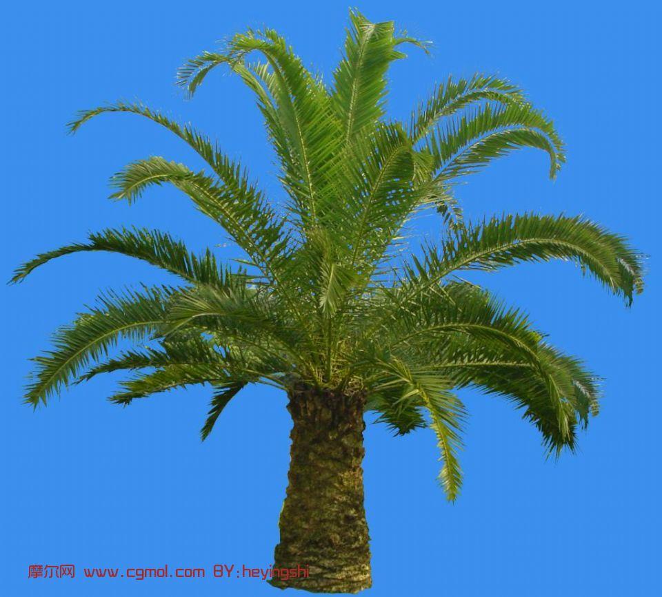 椰子树,树木模型,植物模型,3d模型免费下载,cg模型,网