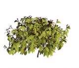 灌木,花草3D模型