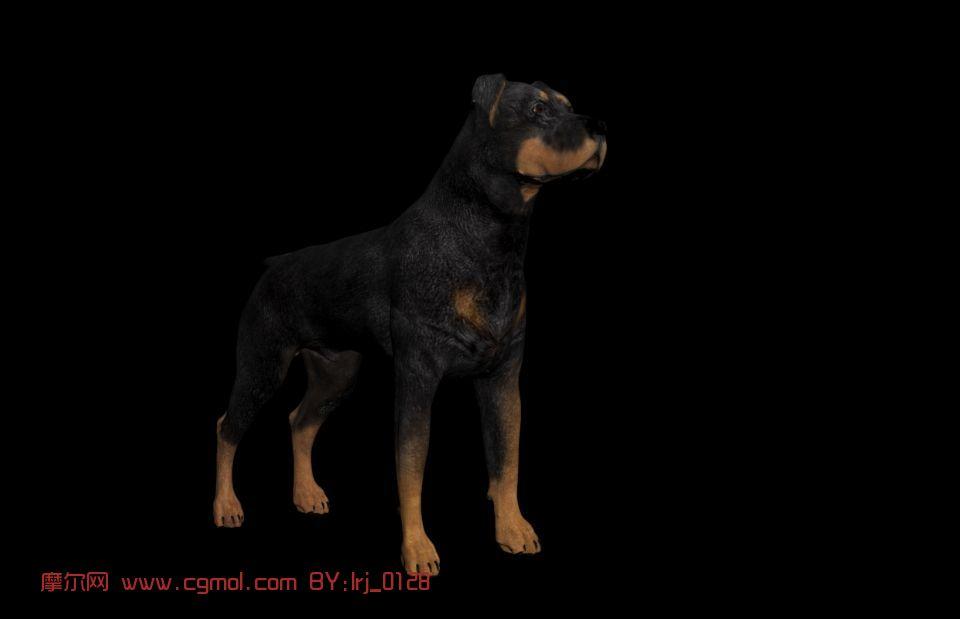 狗,动物3d模型