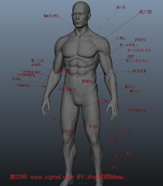 游戏角色 人体肌肉模型 大胆人体模型 三维人体模型三视图高清图片