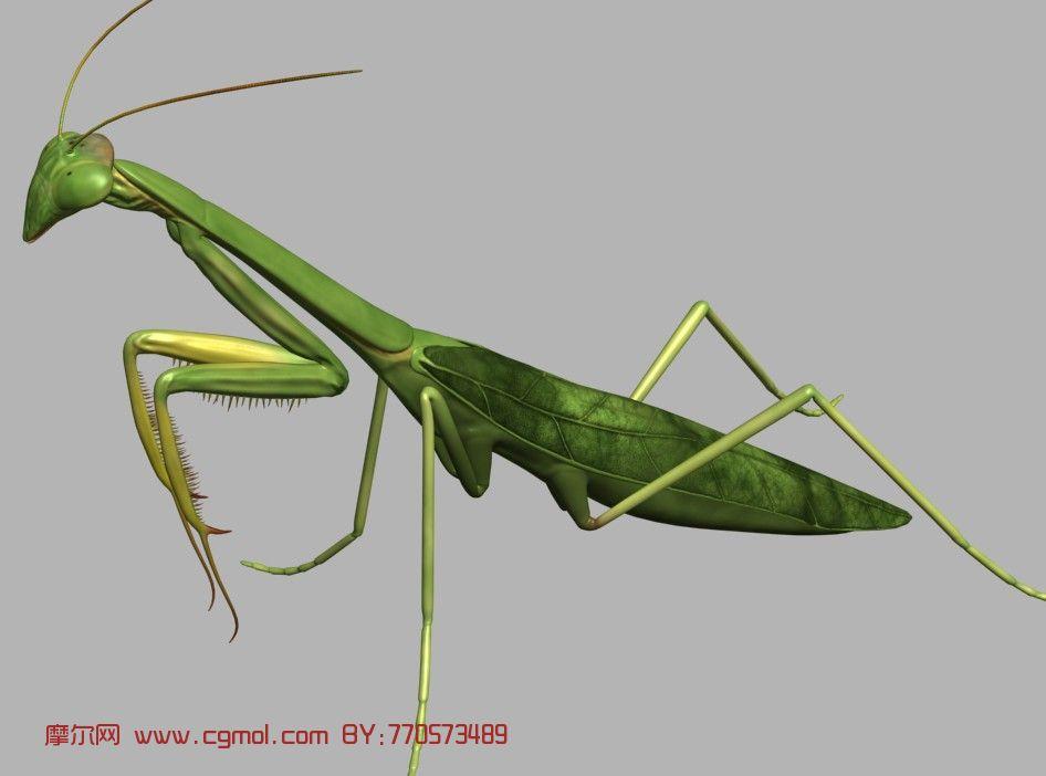 螳螂,昆虫3d模型