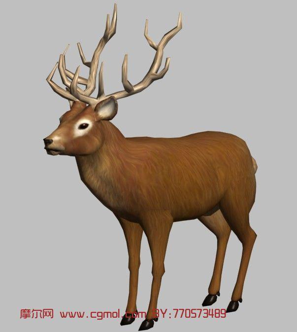 麋鹿3d模型_哺乳动物_动物模型