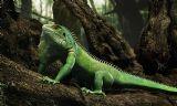 小蜥蜴,变色龙,动物maya模型