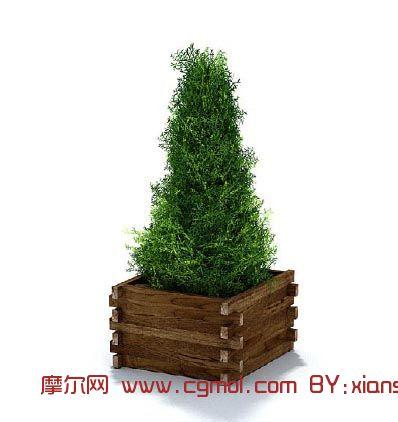 植物,盆栽,树,园林装饰max模型