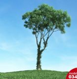 景观树,植物max模型