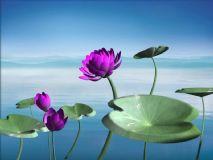 水中荷花,花,植物max模型