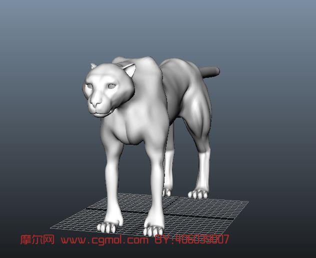 豹子,动物maya模型