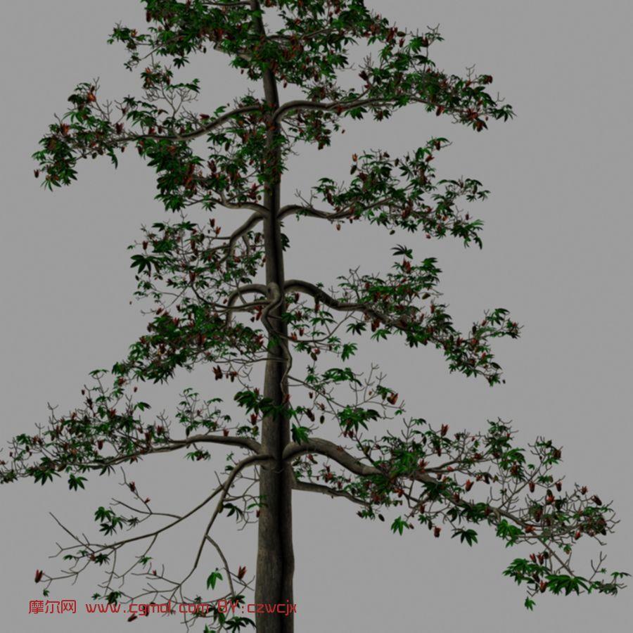木棉树,树木,植物max模型