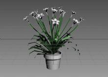植物,花,盆景,花草max模型