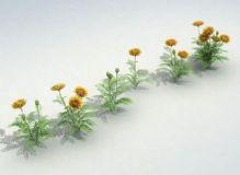 大菊花,花草,植物,花max模型