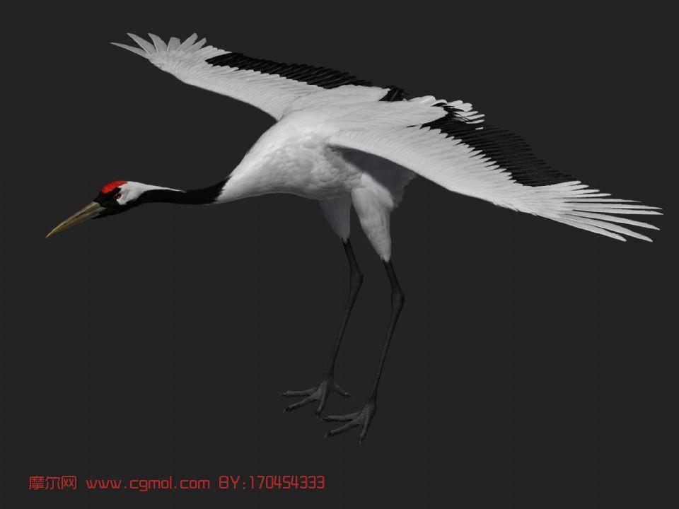 仙鹤,飞禽maya模型