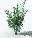 竹子的模型