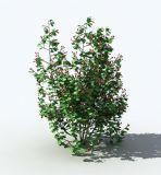 不知道名字的植物