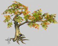 枫树 野外树木
