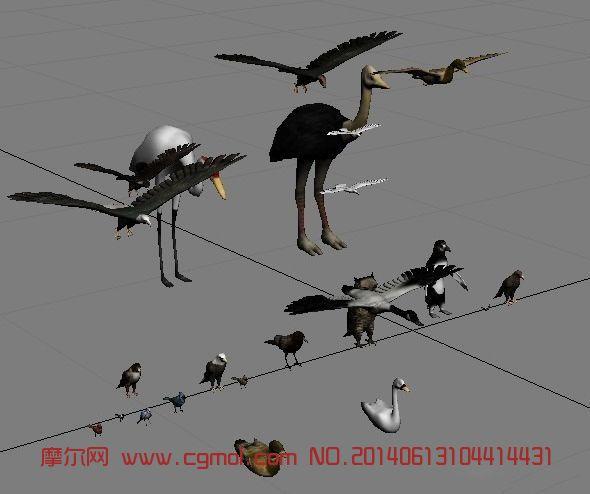 鸟模型集合_飞禽动物_动物模型