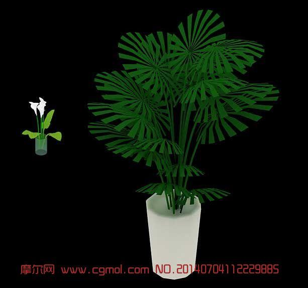 棕榈和马蹄莲 植物3D模型