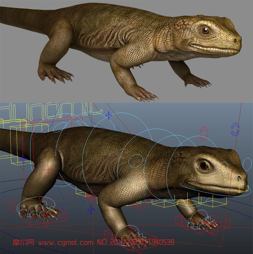 电影级别蜥蜴高模,你值得拥有!_爬行动物_动物模型_3d