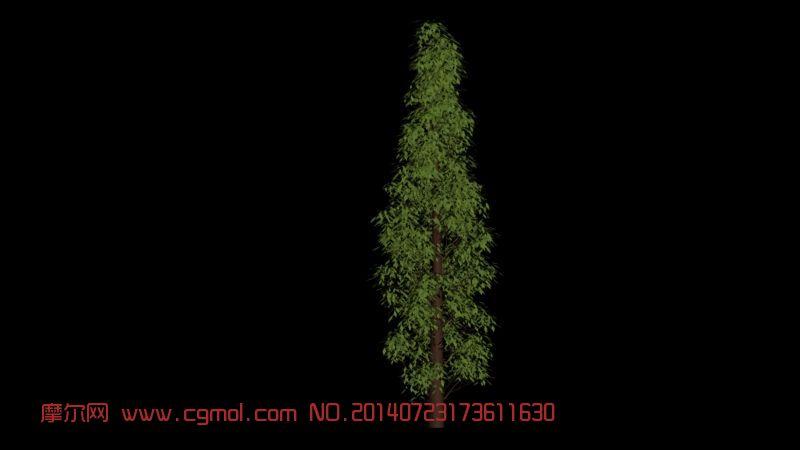 园林景观灌木_树木模型