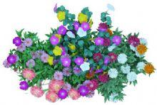 漂亮的花丛,花儿团簇3D模型