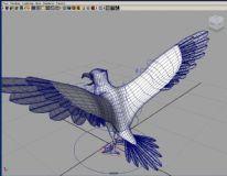 一只已绑定的海鸥