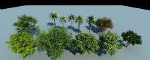 椰树,香樟树等景观植物