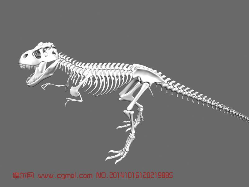 恐龙骨架_其他_动物模型