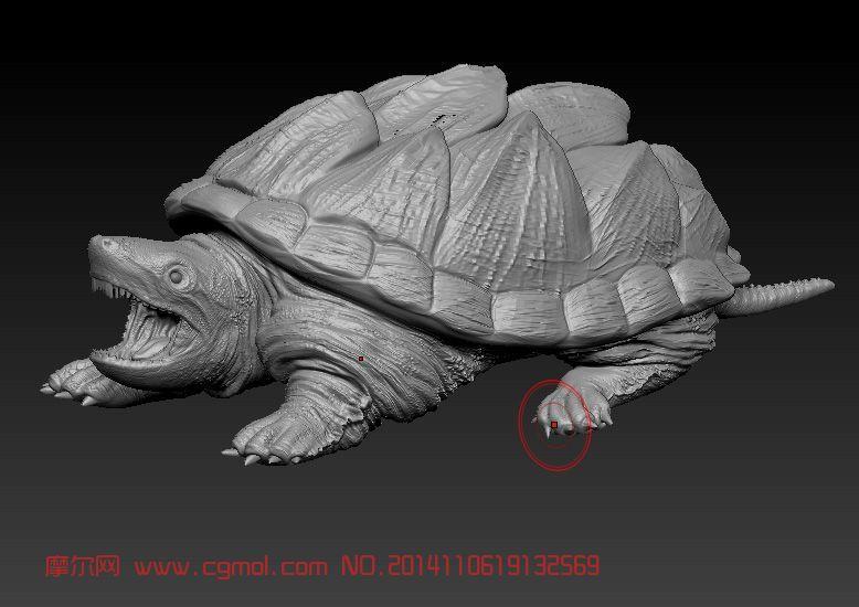 动物模型 哺乳动物  关键词:鳄龟乌龟