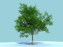 榕树,非常好的树
