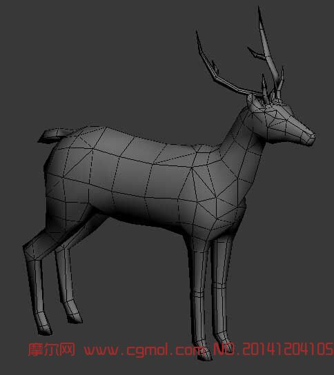 爬行动物_动物模型