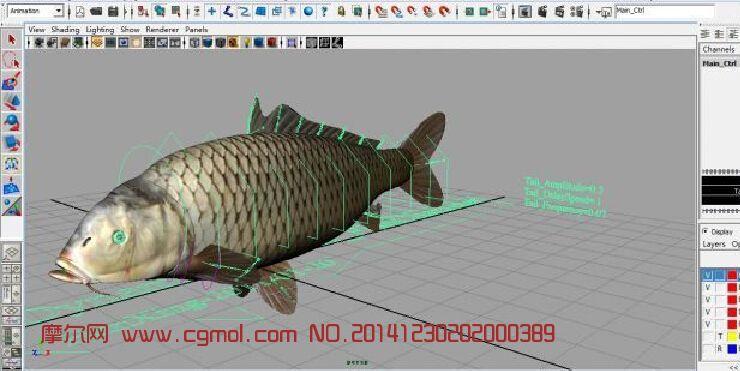鱼类动物_动物模型