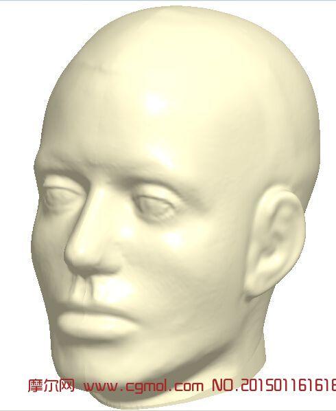 人体头部模型_其他_动物模型