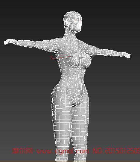 3d人物建模_哺乳动物_动物模型